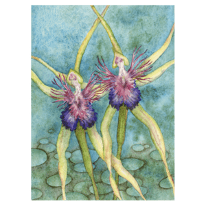Spider Orchids in Blue Giclée