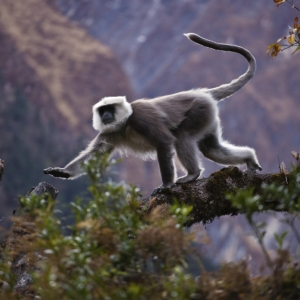 Craig Lovell has photographed wild animals from around the world, Mountain gorillas from Rwanda, orangutans from Borneo, panda bears from China, llamas, vicunas and alpacas from Peru, hornbills from Thailand, wild horses from Argentina in Patagonia, Galapagos tortoise, frigate birds, snowy egrits, and from Africa, lion, cheetah, giraffe, elephant, hippo, rhinoceros, ostrich, zebra and wildebeest to name a few.