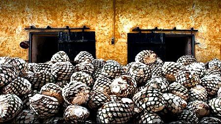 10 mejores cosas para hacer  en Ciudad de Tequila, Jalisco México Proceso de fabricación de Tequila
