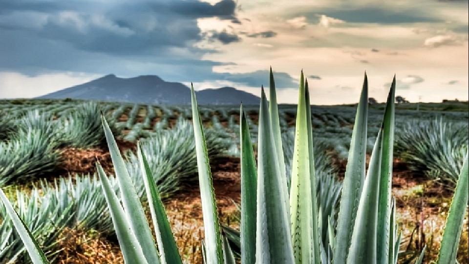 Region denomicion de origen del tequila