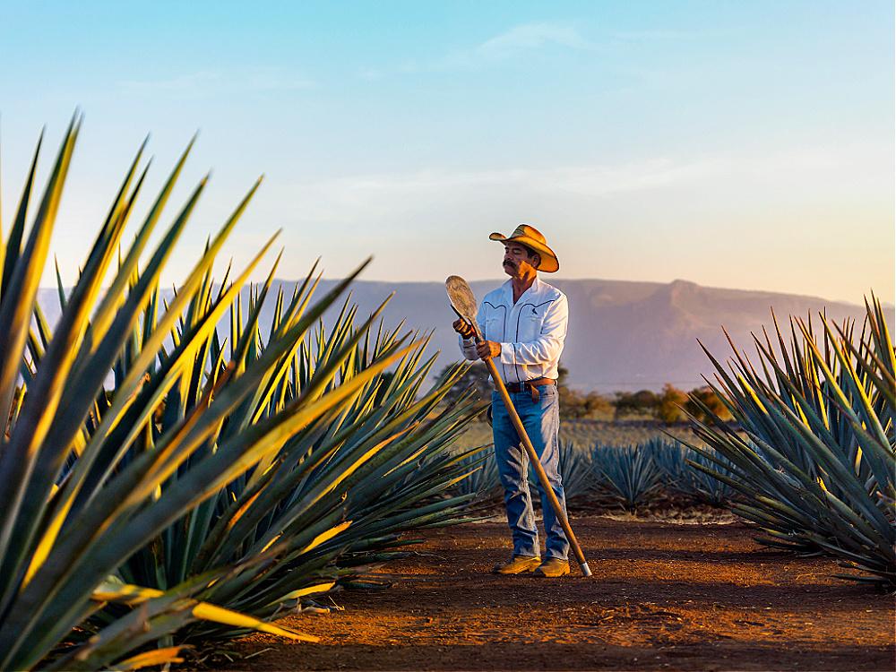 Paisaje agavero y antiguas instalaciones de Tequila Jalisco