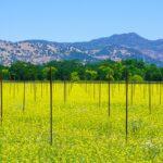 napa, napa valley, wine