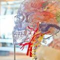 jesse-orrico-60373 - The Brain
