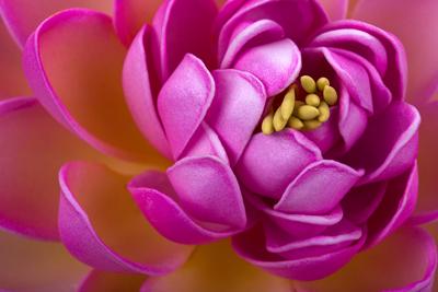 Floral & Garden