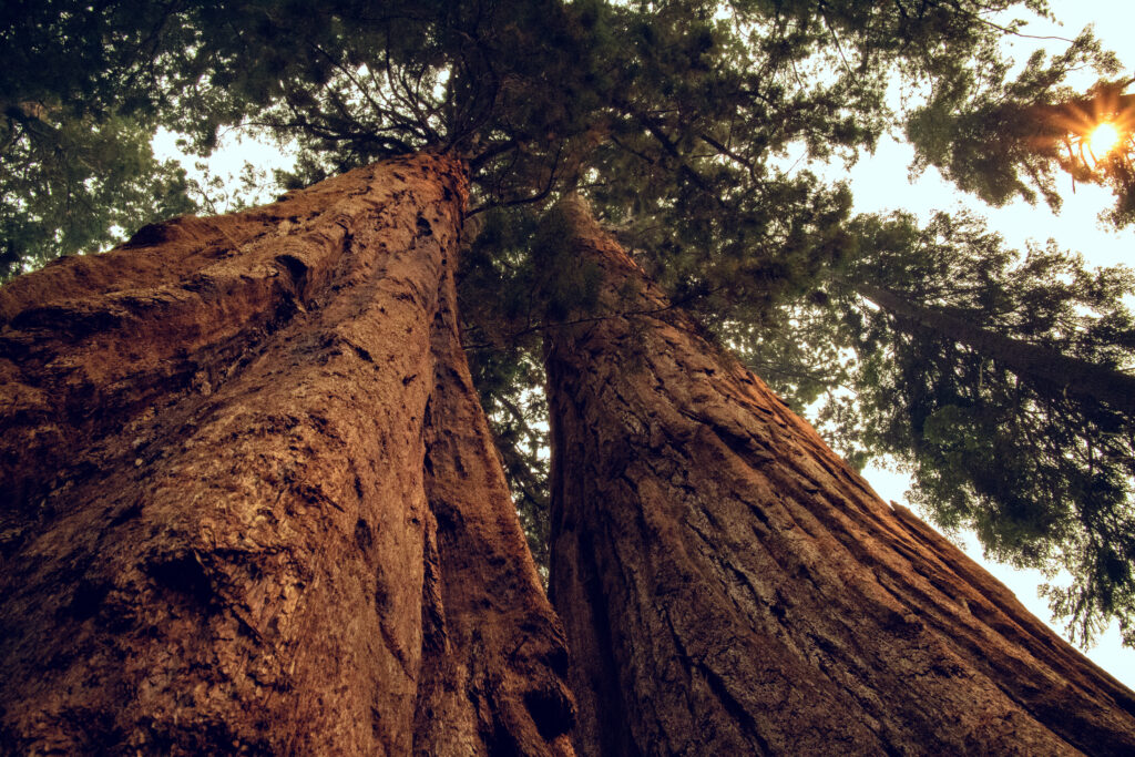 A Day in Sequoia