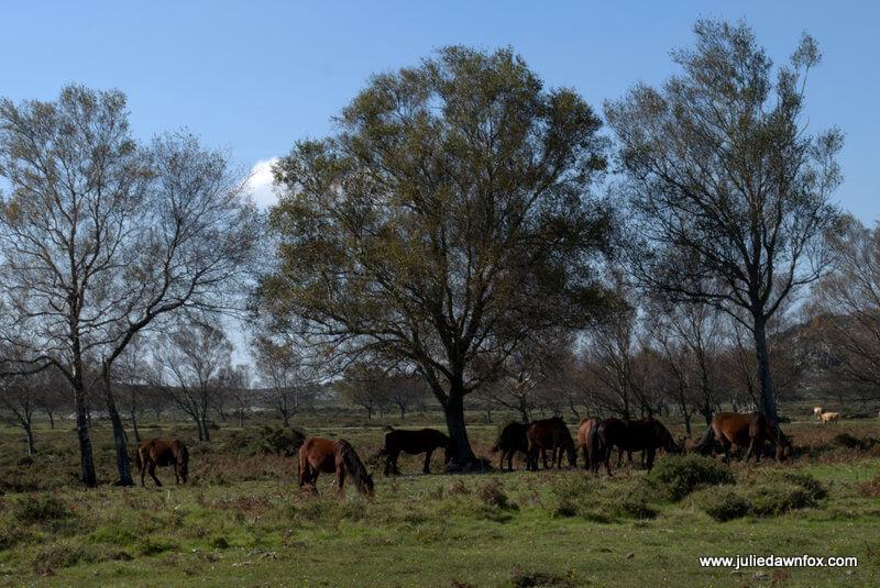 Garrano horses at Senhora do Minho, Serra d'Arga, Portugal. Photography by Julie Dawn Fox