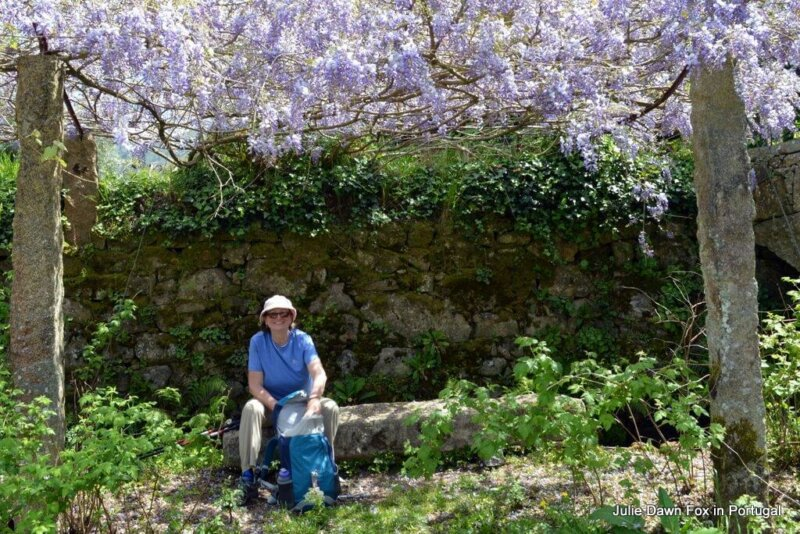 Stone bench under wisteria canopy, Portuguese Way of St. James