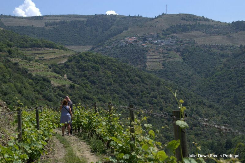 Walk through vineyards, Quinta do Panascal, Douro Valley, Portugal