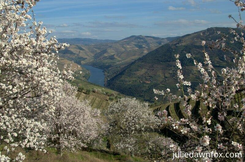 Douro River framed by almond blossom. Julie Dawn Fox in Portugal