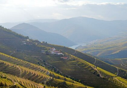 Douro vineyards and quinta from Miradouro de Frei Estevão
