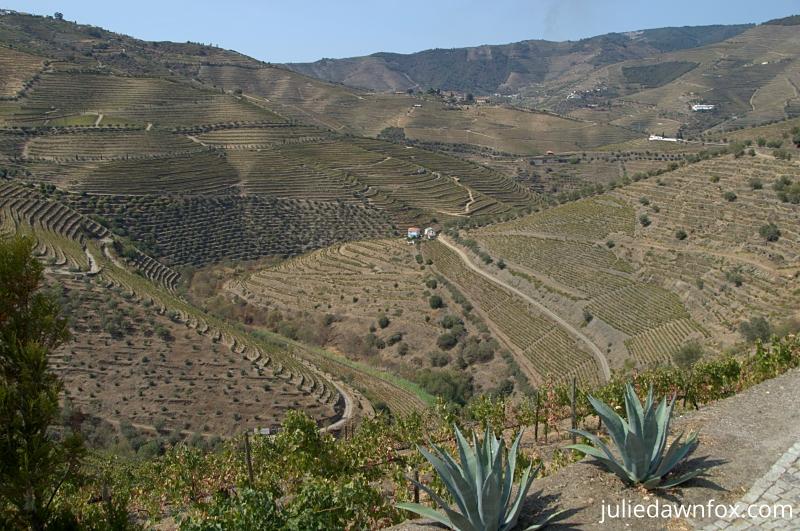Douro views from N222 towards Ervedosa do Douro 2