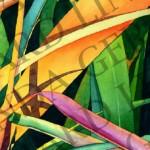 ornamental-grasses-image