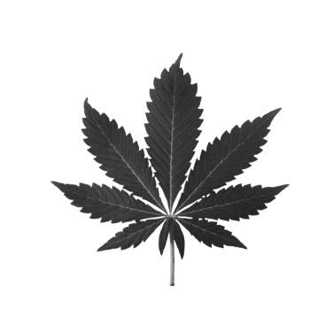 indica-leaf