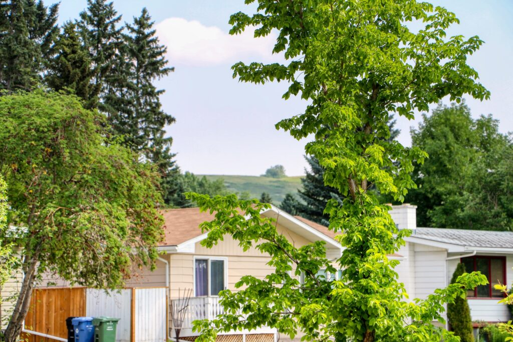 3231 52 Avenue NW - Nose Hill 1