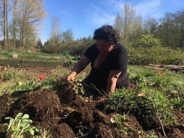 UBC Indigenous-led garden brings connection amid uncertainty