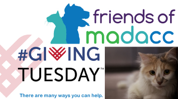GivingTuesday, Friends of MADACC, Donate