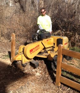Stump Grinding by Bailey Tree
