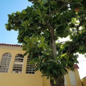 Multi-Year HOA Planning by Bailey Tree LLC