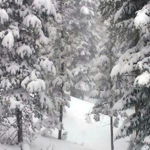 Commercial Snow Removal by Bailey Tree LLC