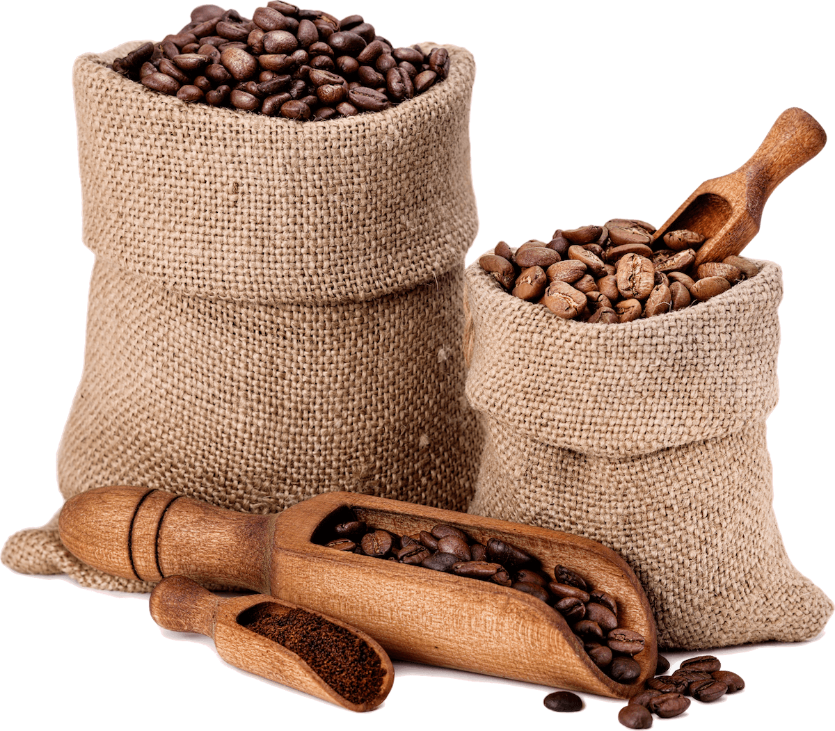 varieties-of-coffee-beans-P8XB6TB.png