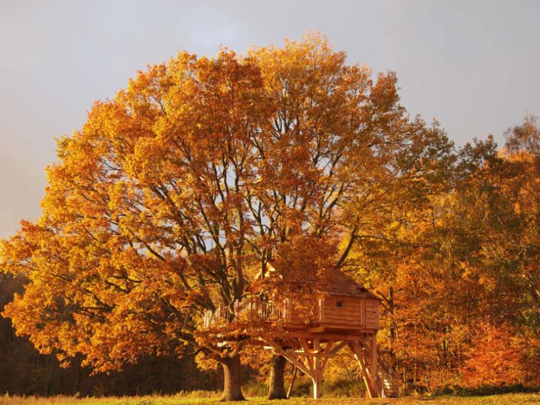 Autumn Tree House Oasis