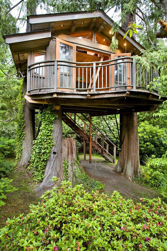 Cypress Tree House