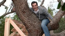 Phil Dunphy's Treehouse