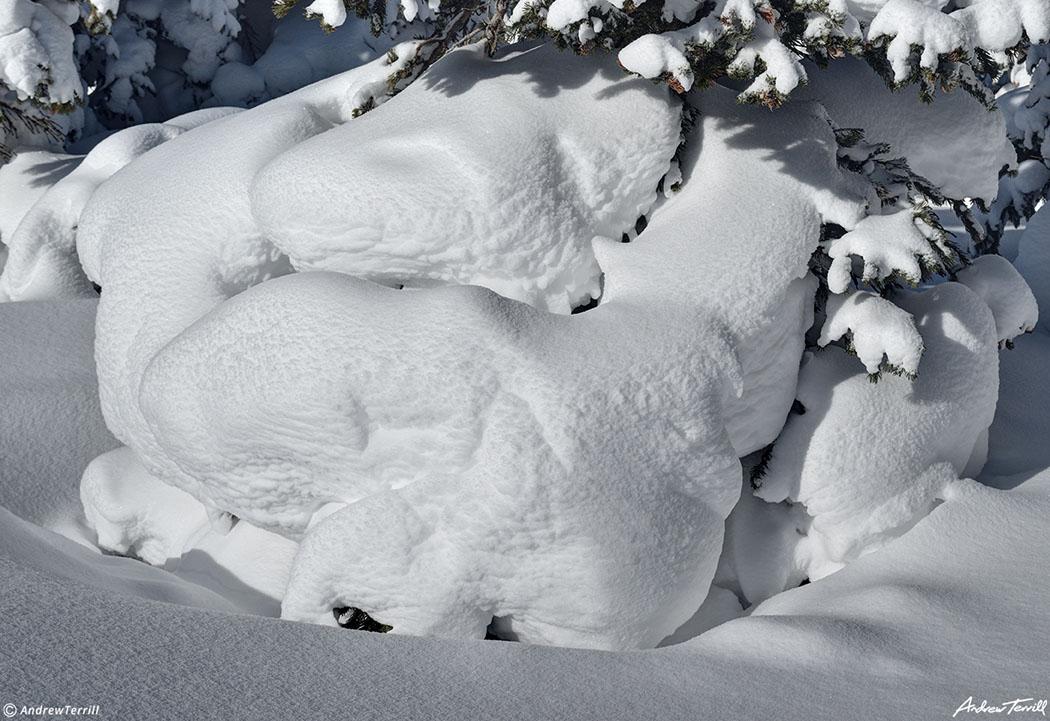 heavy snow on tree near brainard lake colorado february 2021