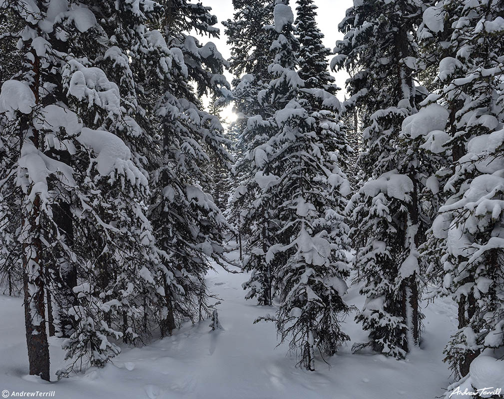 snow covered forest in winter near brainard lake colorado