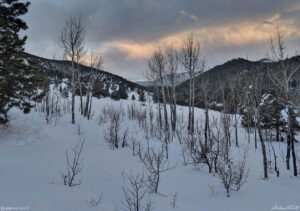 aspen and meadow in evening in golden gate canyon state park colorado