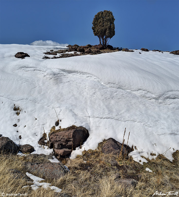massive snow drift and juniper on north table mountain golden colorado march 2021