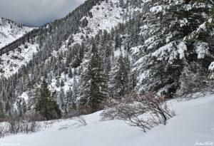 snow on trees near windy saddle above golden colorado