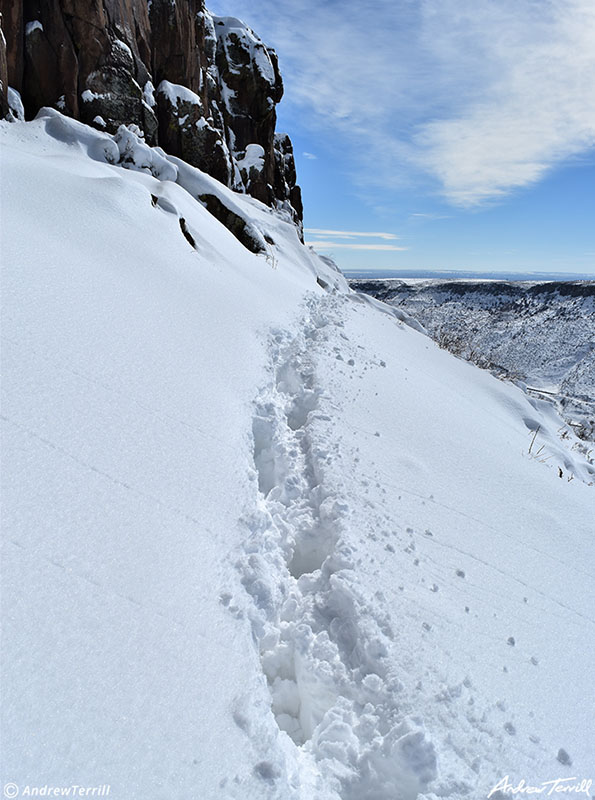 tracks in snow beneath golden cliffs on north table mountain golden colorado