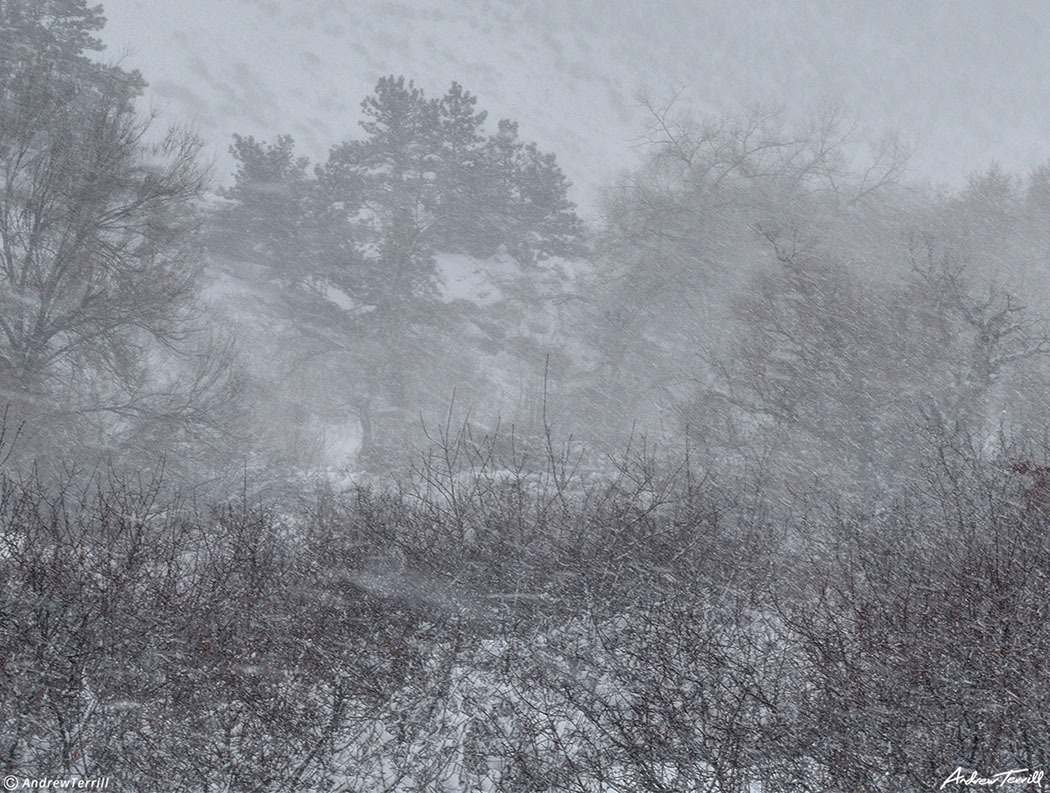 wild wind during snowstorm and blizzard in colorado front range foothills