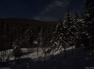 winter forest in moonlight in golden gate canyon state park colorado