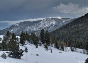 winter scene in golden gate canyon state park colorado