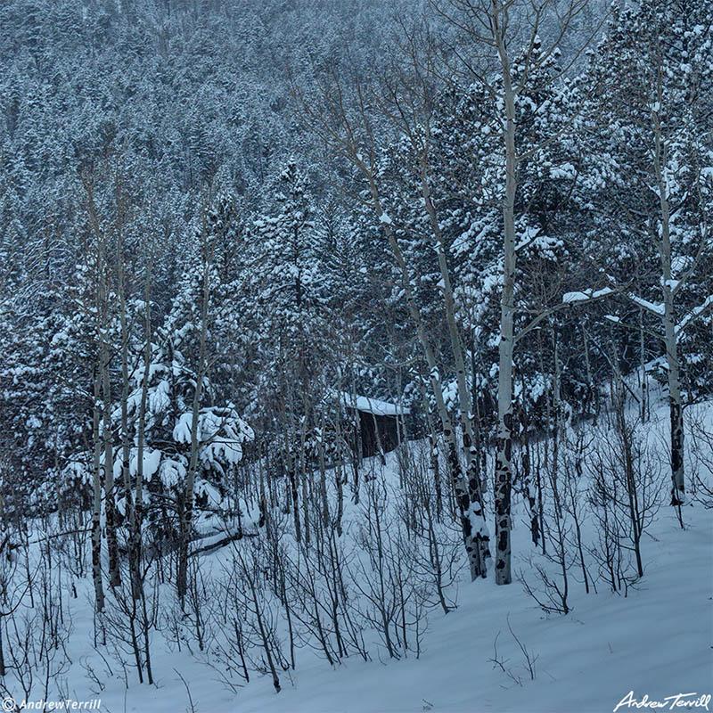 cabin in the forest winter colorado