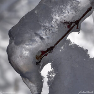 close up of ice on twig and branch winter april 2021