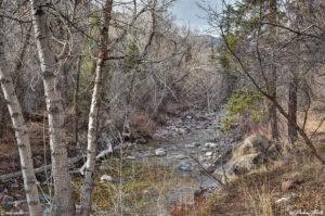 creek in the woods spring colorado