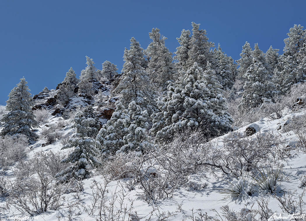 frosted trees on mount galbraith open space golden colorado april 2021