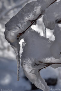 ice and icicles on twig winter 2021