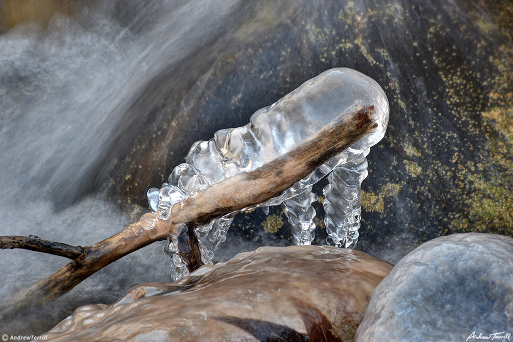 ice frozen onto stick in mountain river