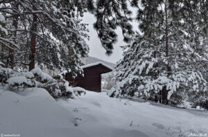 lean to shelter in winter forest golden gate canyon state park colorado