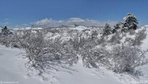 winter snow on mount galbraith open space near golden jefferson county colorado