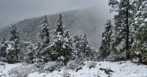 colorado forest in snow and fog may 2021