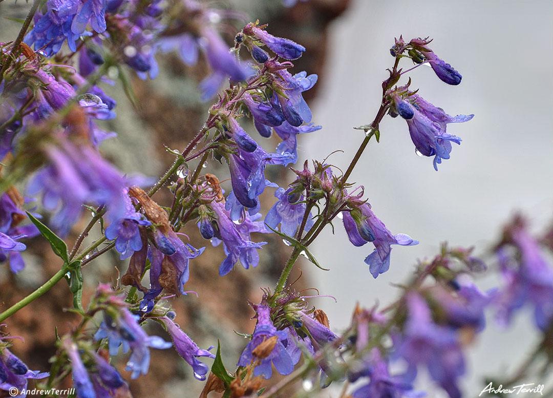flowers in the rain colorado front range