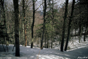 mountains forests and snow in the aspromonte calabria italy May 3 1997
