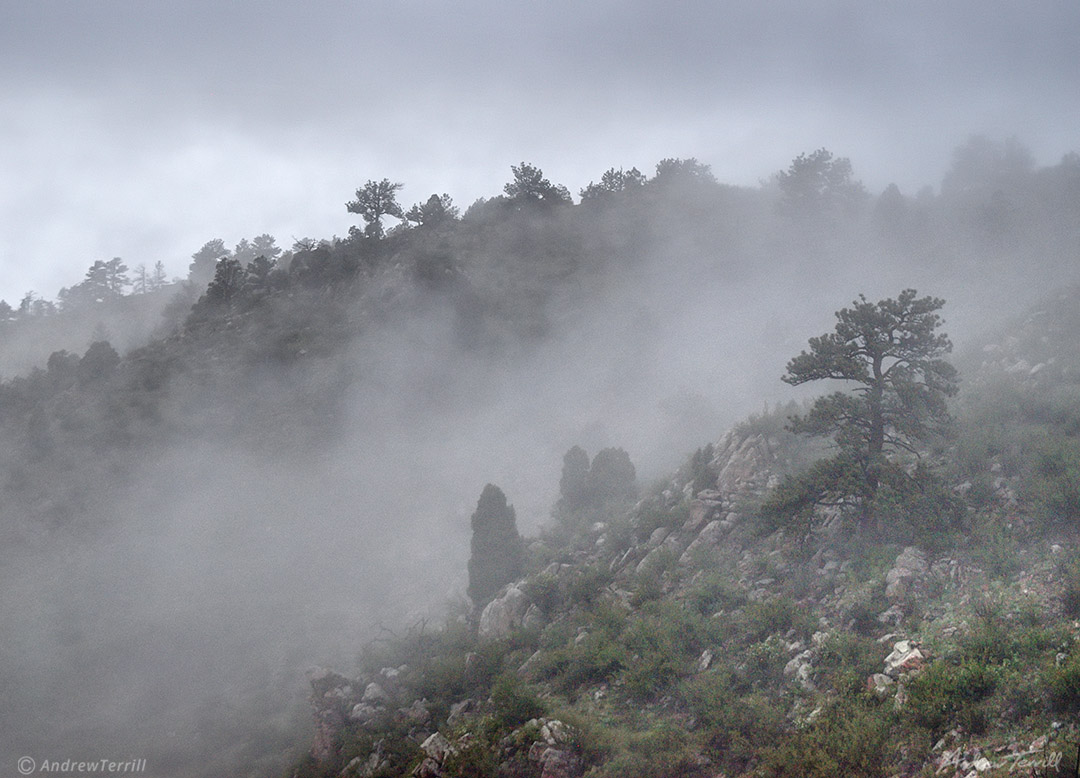 pine trees and drifting fog on Mount Galbriath Golden Colorado May 2021