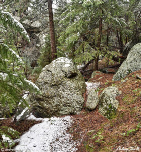 rocks boulders and pine trees in wilderness colorado valley