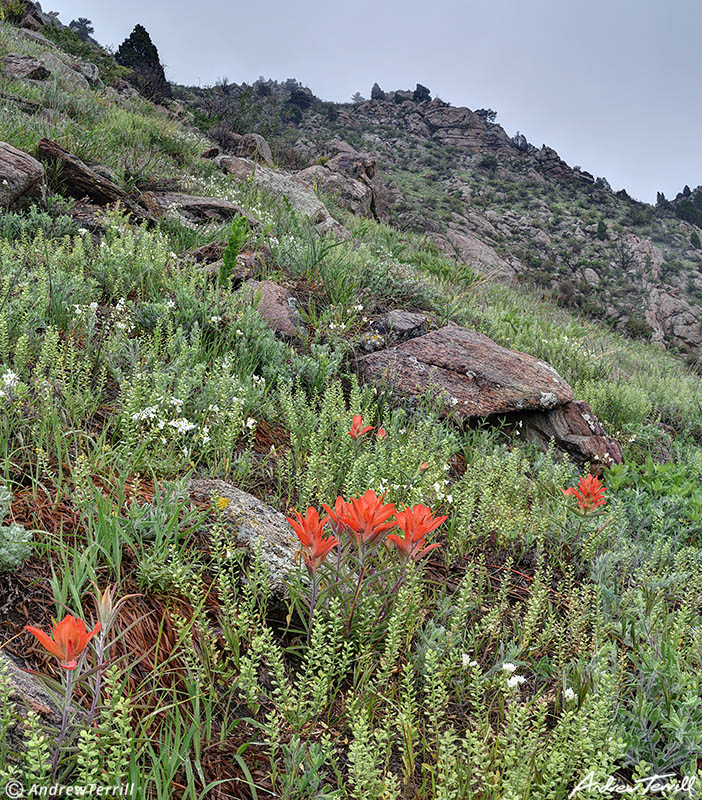 wildflowers and indian paintbrush on Mount Galbriath Golden Colorado